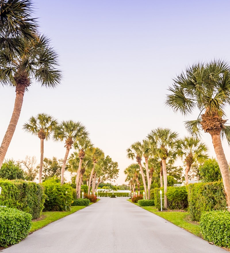 Marco-Shores-Road-with-palm-trees